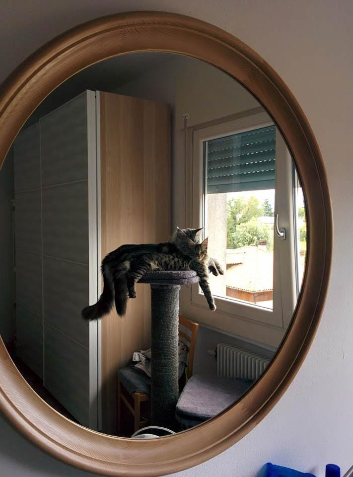 Maine Coon in bedroom