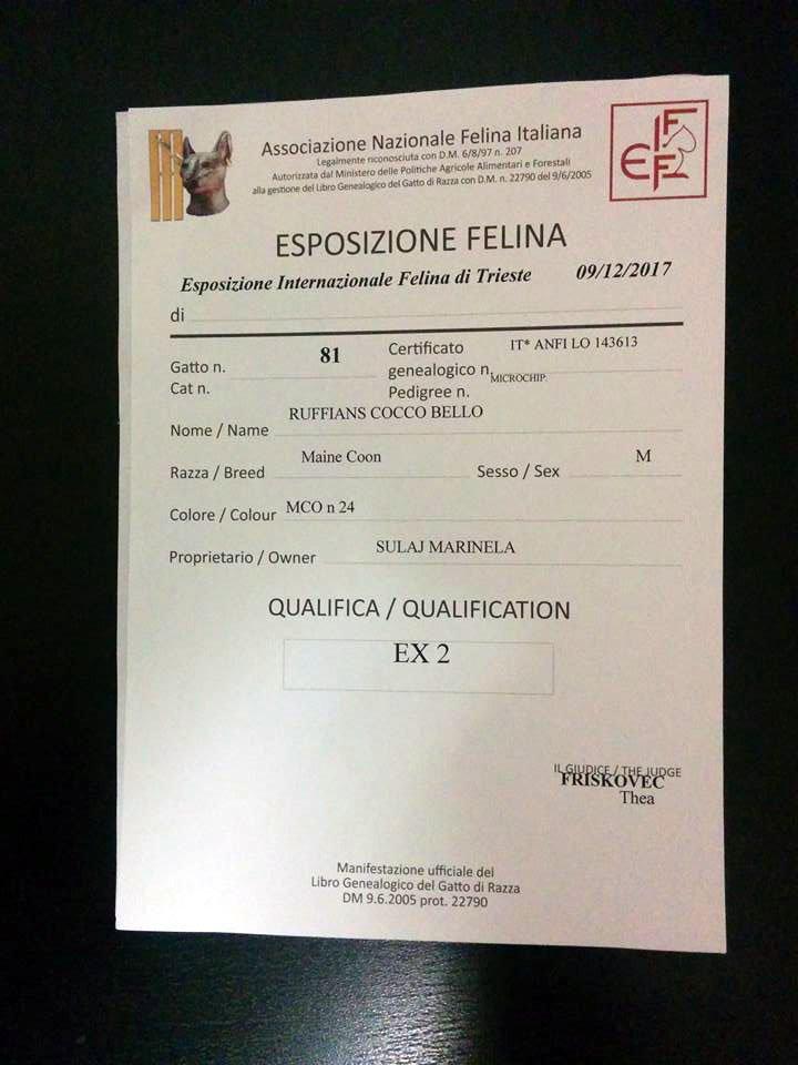 Ruffians Cocco Bello EX2