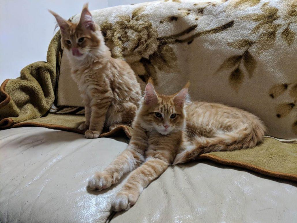 Pensione Per Gatti A Pordenone