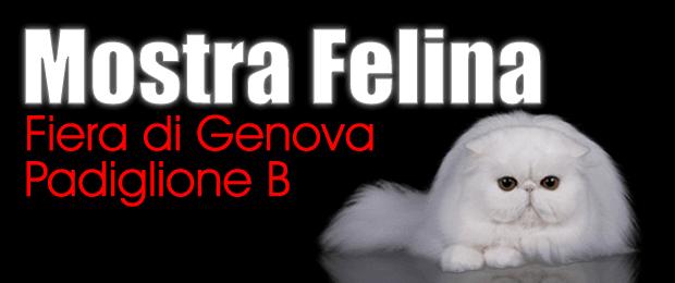world cat show in Genoa