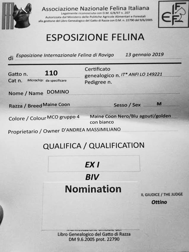 2019 Jan 13 Rovigo Ruffians Domino Ex1 BIV