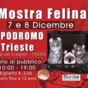 Mostra Felina Ippodromo Trieste