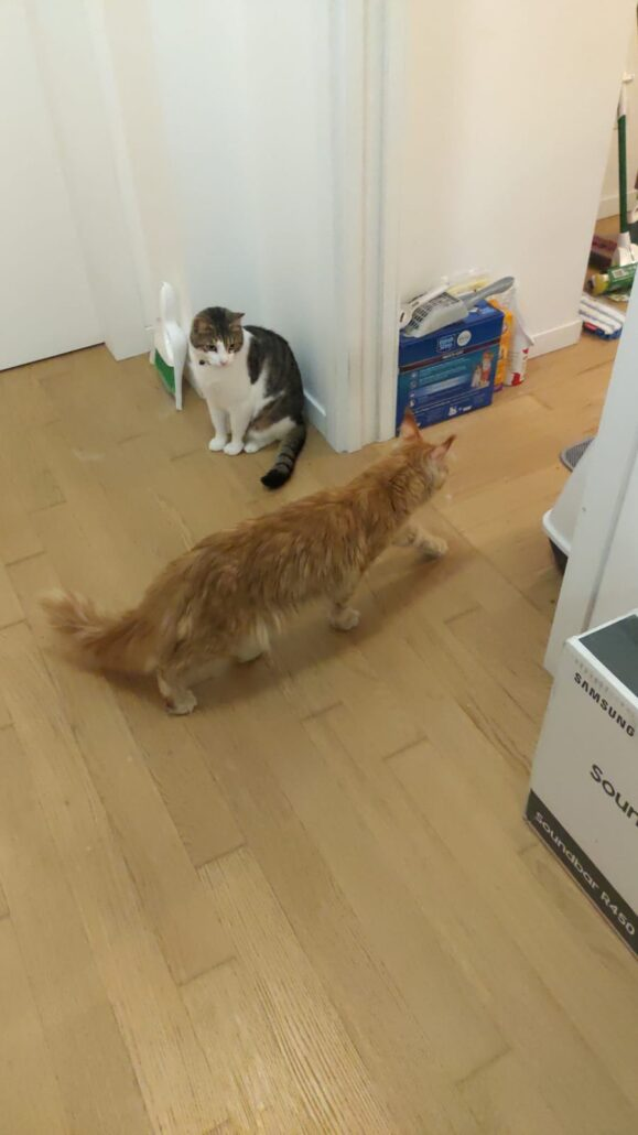 two cats meeting for the first time